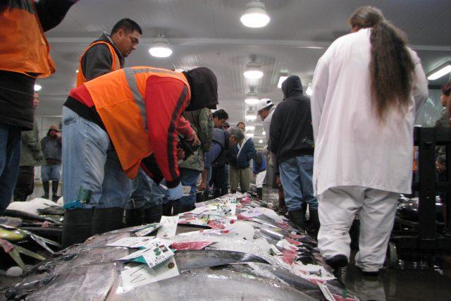 全米でここだけ!マグロ魚市場へ行こう!